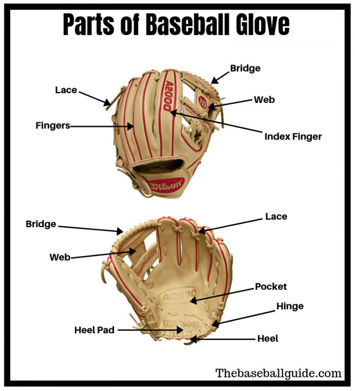 Showing different parts of baseball & softball glove